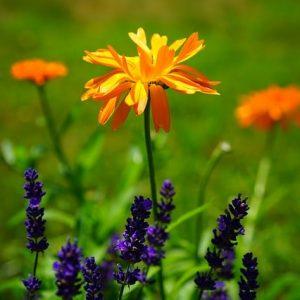 Hyperuricemie et homeopathie